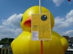big rubber duck in Hasselt